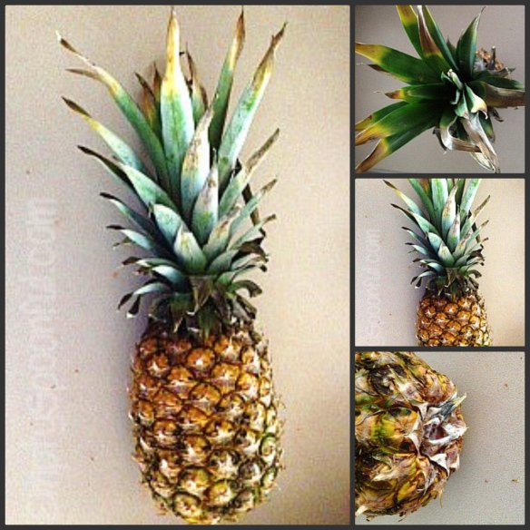 Old pineapple collage